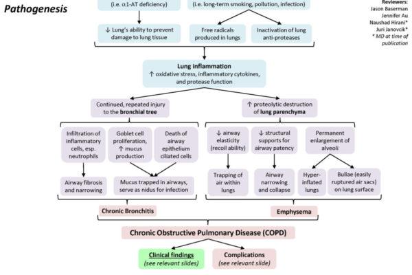 COPD-Pathogenesis3-1024x768.jpg