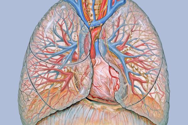 anatomy_lungs_lung_desktop_2640x1927_wallpaper-373502-1024x747.jpg
